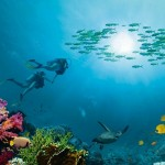 Diving in Sharm El Shiekh
