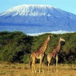 Sakura Kenya tour Packages